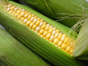Китайцы впервые будут импортировать кукурузу из Украины