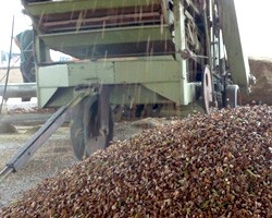 FAO: Мировые цены на продовольствие установили новый рекорд за последние 20 лет