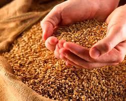Аграрный фонд распродает зерно за долги