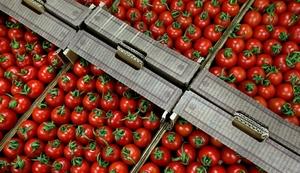 В Европе будут покупать исландские овощи