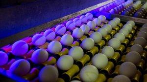 В Великобритании поступили в продажу яйца с инсектицидом