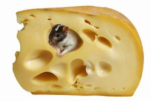 Украинский сыр опять невыездной