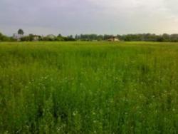 Как купить земельный участок в Киевской области?