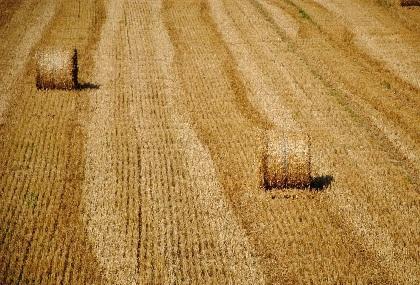 Земельный мораторий можно отменять поэтапно