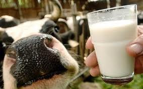 Украину ждет мясо-молочное подорожание