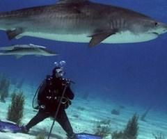Любители работы, которая ведется под водой