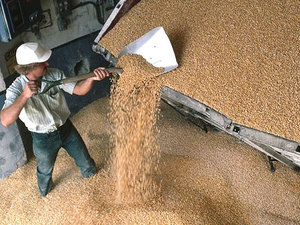 Хватит ли Украине зерна?