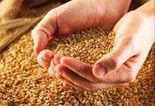 Депутаты отказались установить мораторий на экспорт зерна
