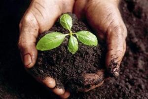 К 2015 году агрохолдинги скупят более 25% пахотных земель страны
