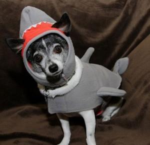 Одежда для собак: купить онлайн