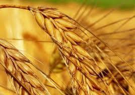 Украина запретила экспорт пшеницы