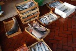 Как в Киеве продавали гнилую рыбу и чем это закончилось (ВИДЕО)