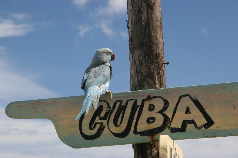 Впервые за полвека Куба начнёт легальный экспорт в США