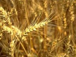 Украине предъявили зерновые претензии