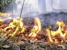 Украина в пожарной опасности