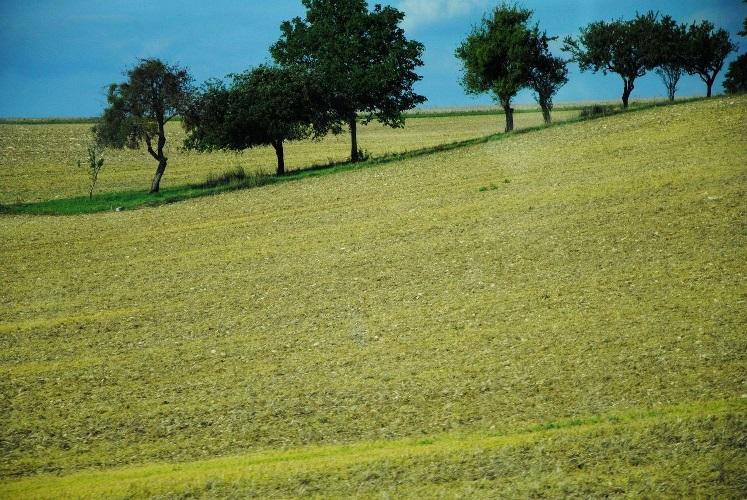 Земельная аренда: законодательство обновляется, а проблемы остаются