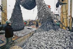 Вылов рыбы стремительно сокращается