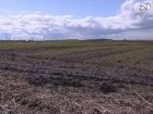В 2013 необходимо завершить земельную реформу - Присяжнюк
