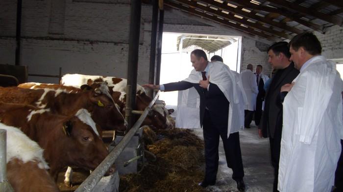 Состояние отрасли животноводства в Киевской области