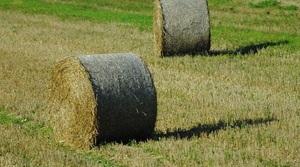 Кредиторы готовятся к принудительному исполнению аграрных расписок