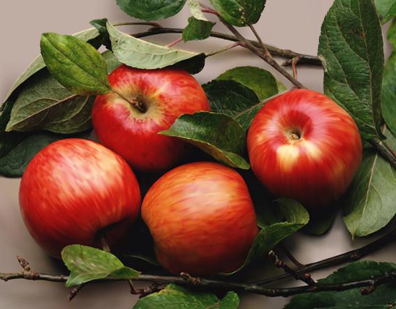 Яблочный вектор
