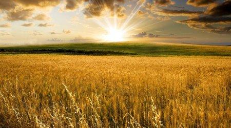 Проблемы агропромышленного сектора