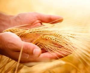 Турция оплачивает поставки пшеницы в биткоинах