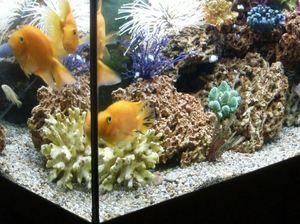 Как аквариум помог взломать казино