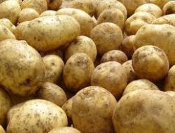 Продам картошку Томск.