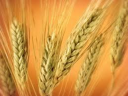 Квоты на экспорт зерна подпортили бизнес-климат Украины