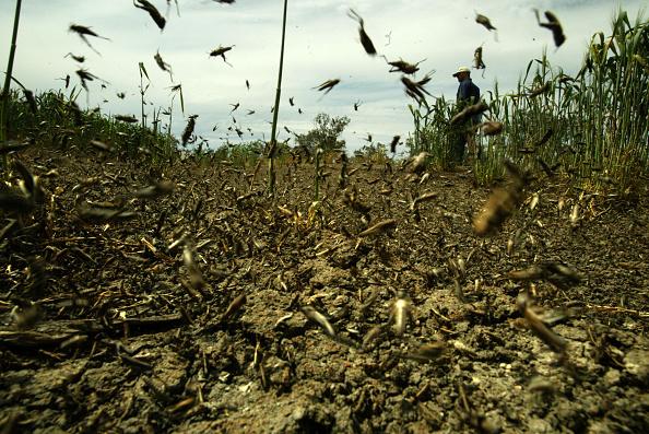 Нашествие ядовитых насекомых