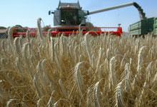 Кабмин ввел квоты на экспорт зерна