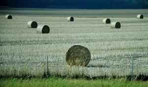 Украина нуждается в системном агростраховании