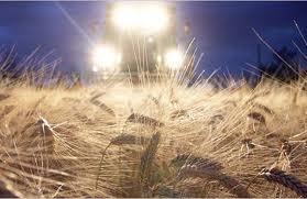 Экспорт пшеницы перекроют 1 декабря