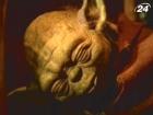 Спилберг, Дель Торо и Тарантино открещиваются от «Звездных войн»